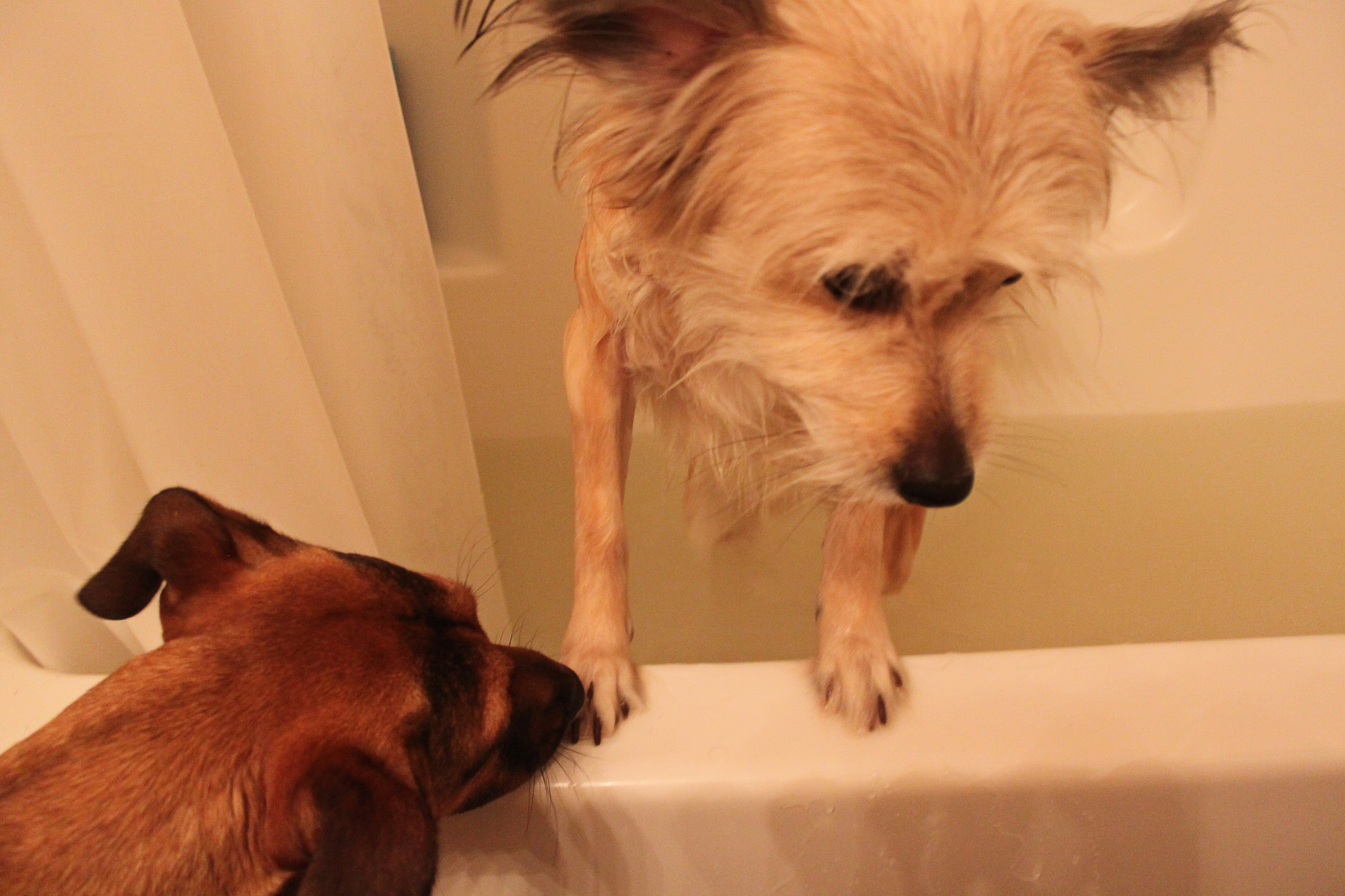 Homemade oatmeal bath for dogs homemade ftempo for Diy dog bathing system