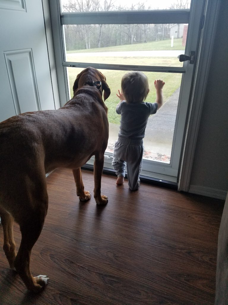 growing up with dogs, dogs and kids, dogs and babies