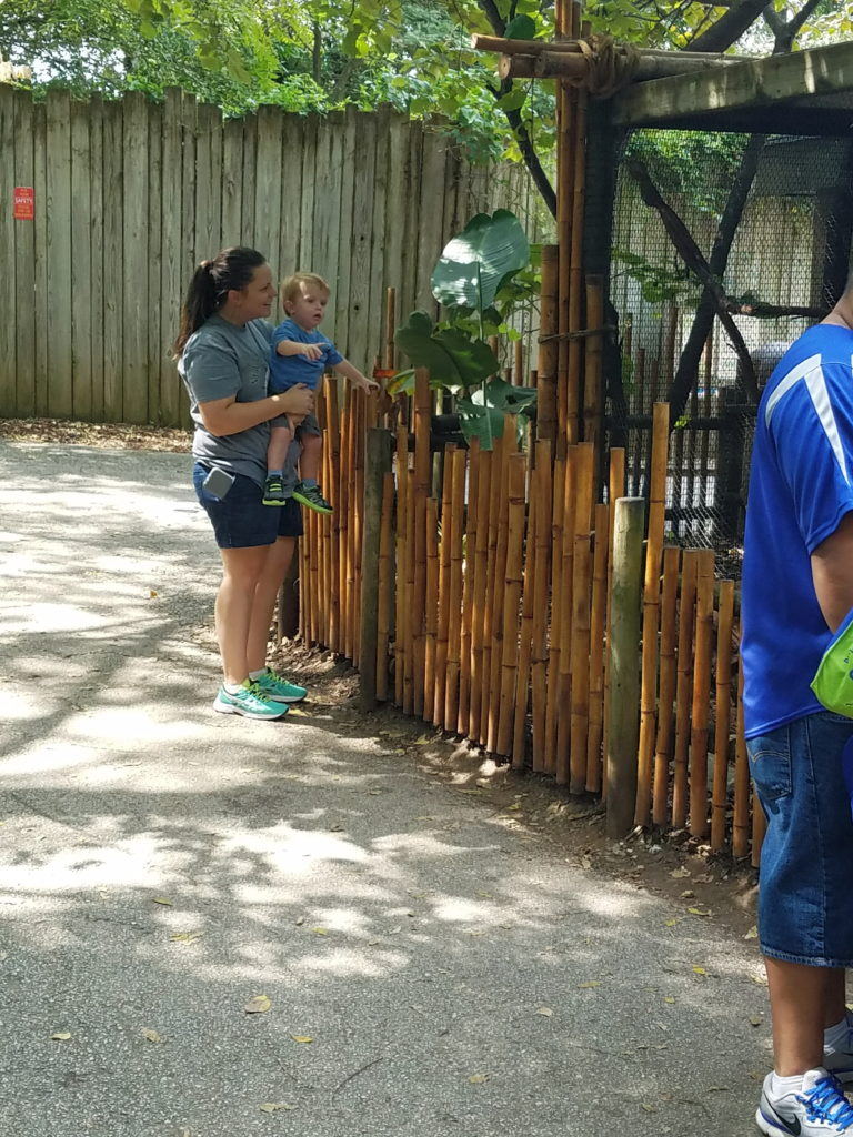 laguna tide, laguna tide diaper bag, diaper backpack, laguna tide diaper backpack review, #lagunatide, springfieldmo, dickerson park zoo, mother and son, walking with family, mom life