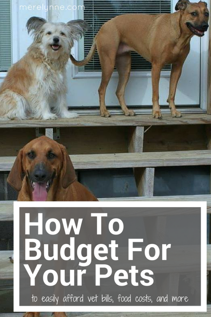 How To Budget For Your Pets, budget for pets, budgeting for dogs, budgeting for pets, meredithrines, merelynne, meredith rines, budgeting tips